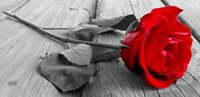 Alliance of Divine Love Red Rose