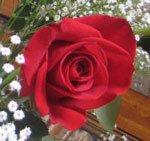 Soul Plane Alliance of Divine Love (ADL) Oath of The Rose